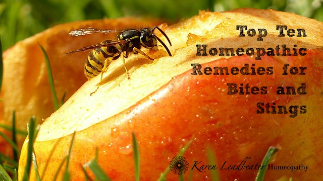 Top Ten Homeopathic Remedies for Bites and Stings